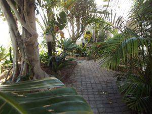 garden outside at conifer guest house port elizabeth